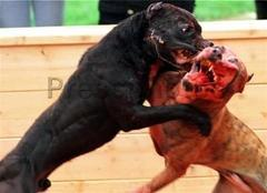 Img dogfight1 optimized