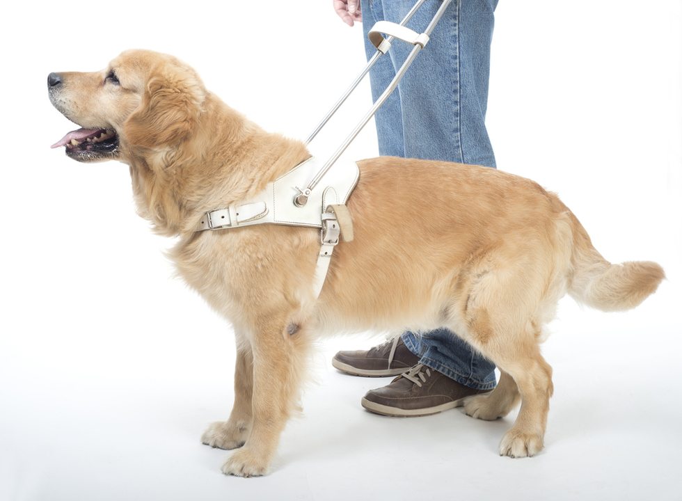 Sdfraud_guidedog
