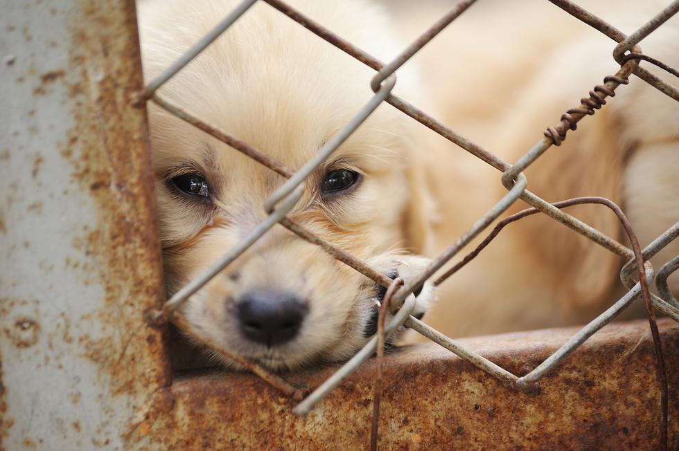 lonely dog in rusty cage