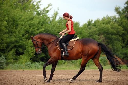 Horseback 20riding