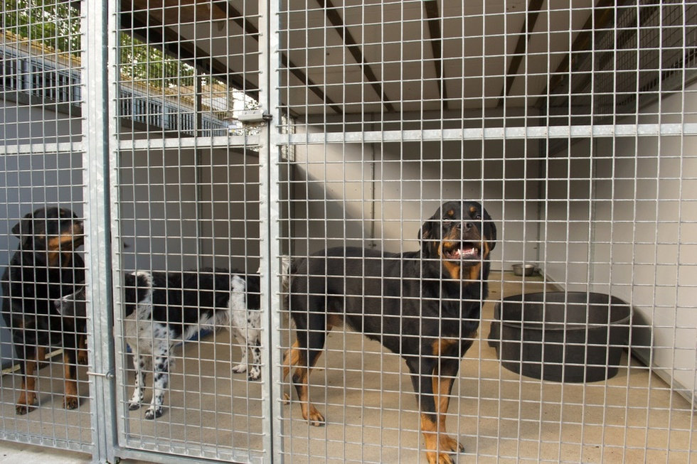Dogs 20in 20cage