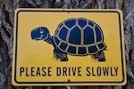 Slow 20turtle