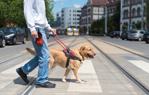 Man in jeans and button up shirt walking across a city street with a service dog
