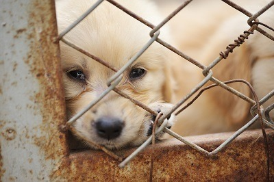 Colorado animal cruelty and abuse laws - 18-9-202 CRS