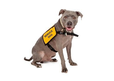 Learn to be a dog trainer colorado