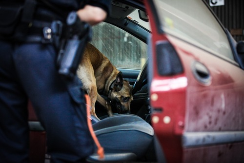 Police dog searching the inside of a car - possession of a controlled substance while armed is a violation of Health & Safety Code 11370.1 HS