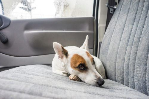 dog laying in the backseat of a car
