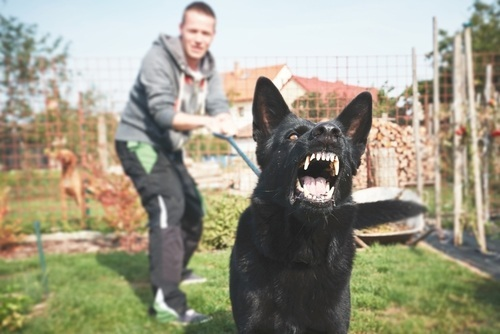 young man restraining large growling dog on leash