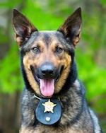 police dog with badge