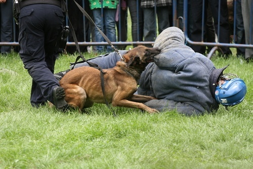 police dog biting person