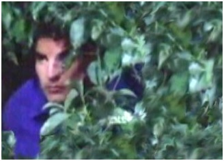 Img peeking loitering bush