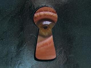 Img-stalking-eye