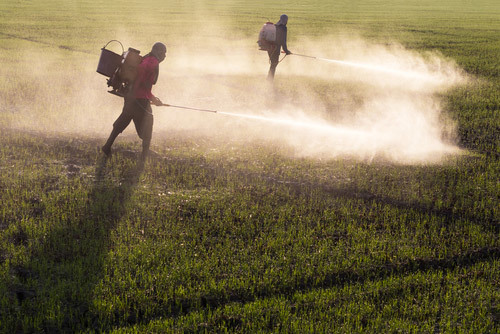people spraying herbicides in the fields