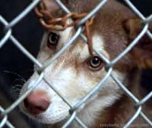 dog looking through cage as an example of animal cruelty under CRS 18-9-202