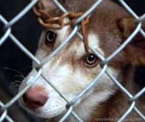Img animalcruelty