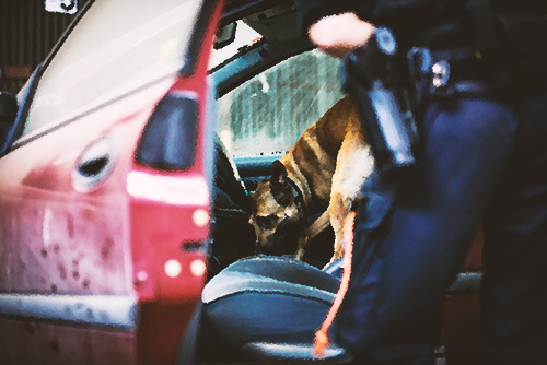 police dog searching a vehicle
