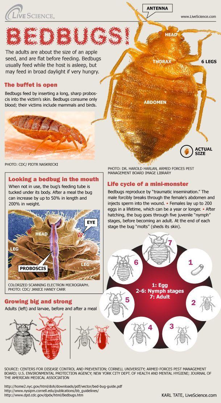 Bedbug Info Sheet