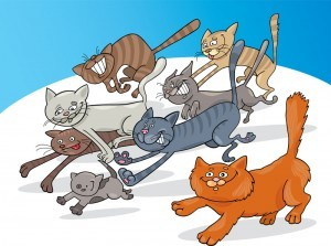 Cats canstockphoto5960808 300x223