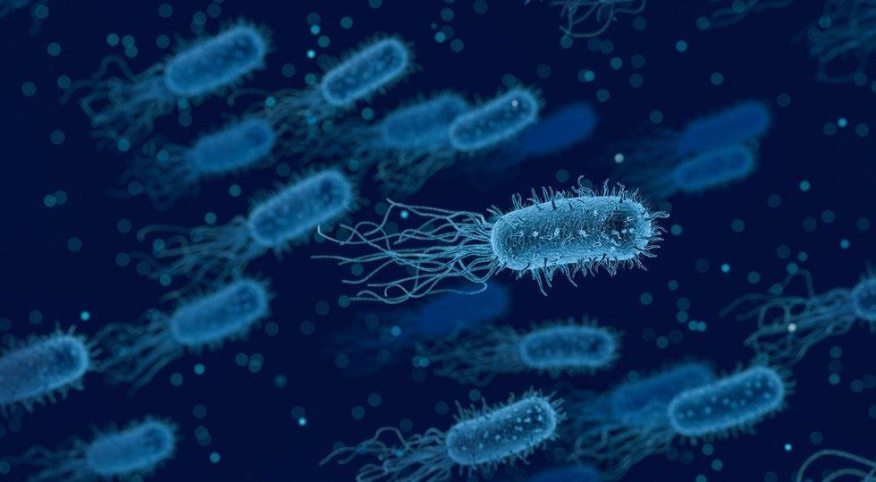 Bacteria 3662695 1920