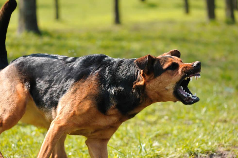 Dog attack settlement