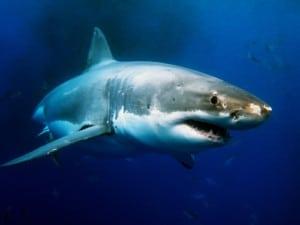 shark-attack-lawsuit-300x225