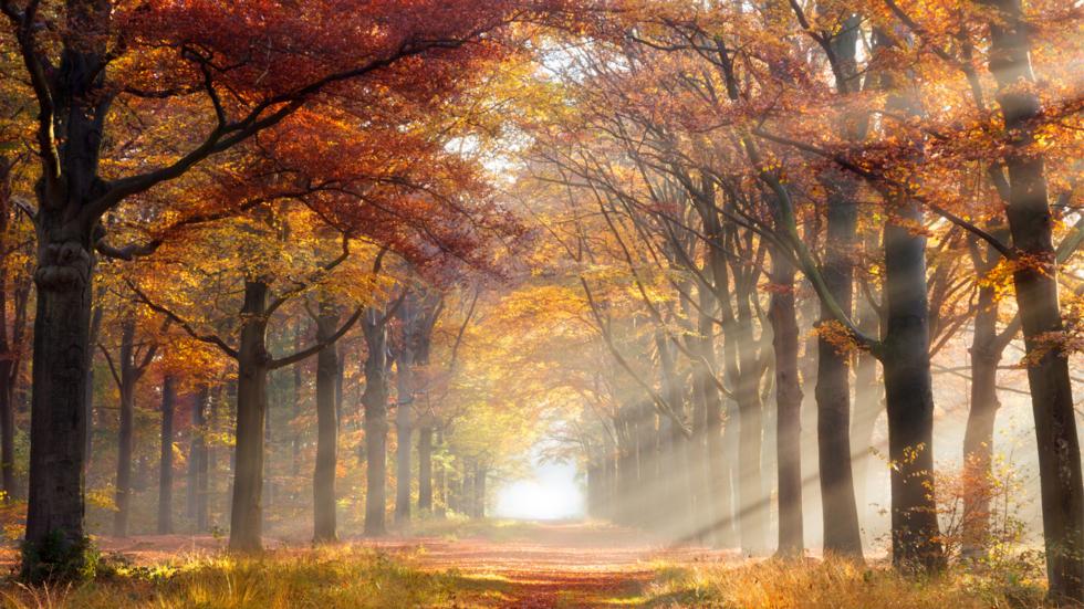 Autumn Safety
