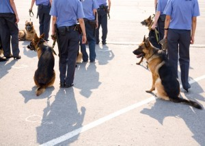 Dogs police 6861884 300x213
