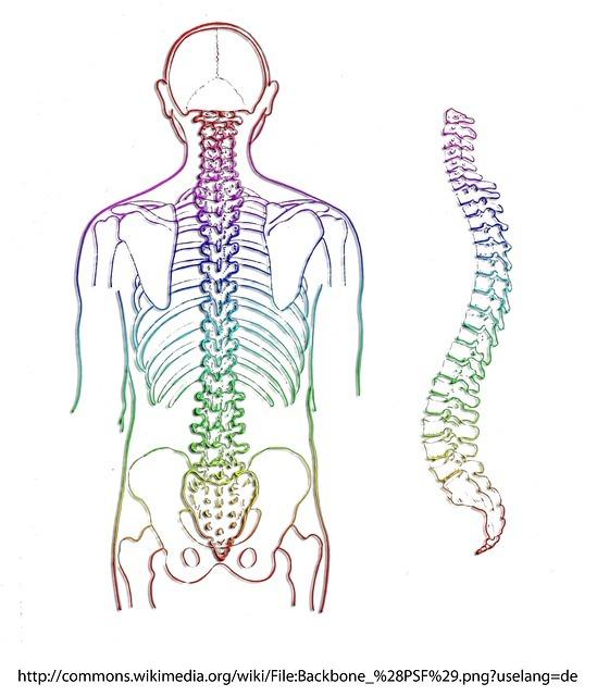 Spine-257870_640