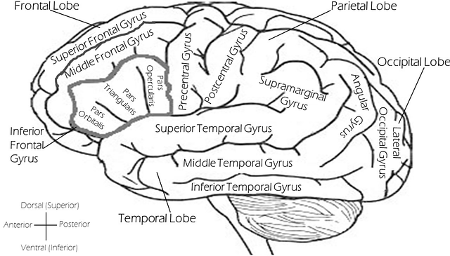 Brain-2026346_640