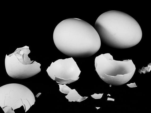 Egg 20shell 20plaintiff 20