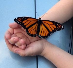 Abutterflyinthehand