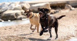 Dc dog beach fun 300x158