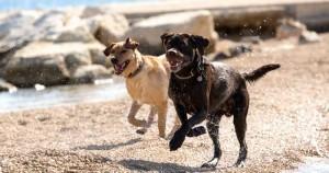 Dc-dog-beach-fun-300x158
