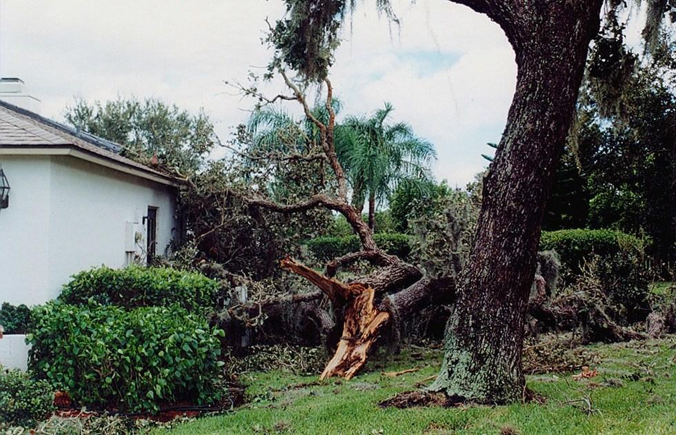 Tree 20fell 20on 20house