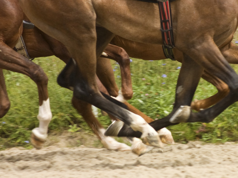 Horselegs