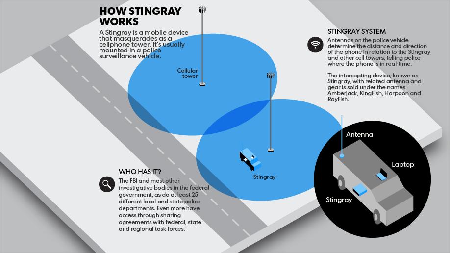 Stingray Info Graph