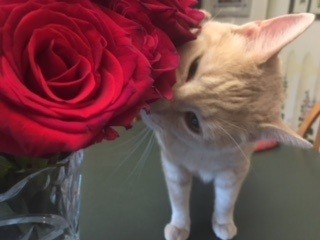 Cat 20smelling 20roses