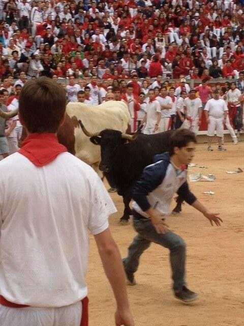 Bull in Ring