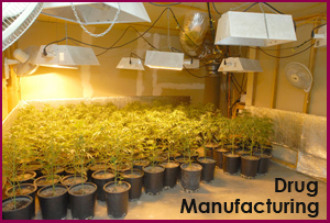 Cultivation is also considered Drug Manufacturing