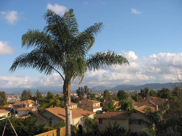 View of Murrieta with large Palm in foreground