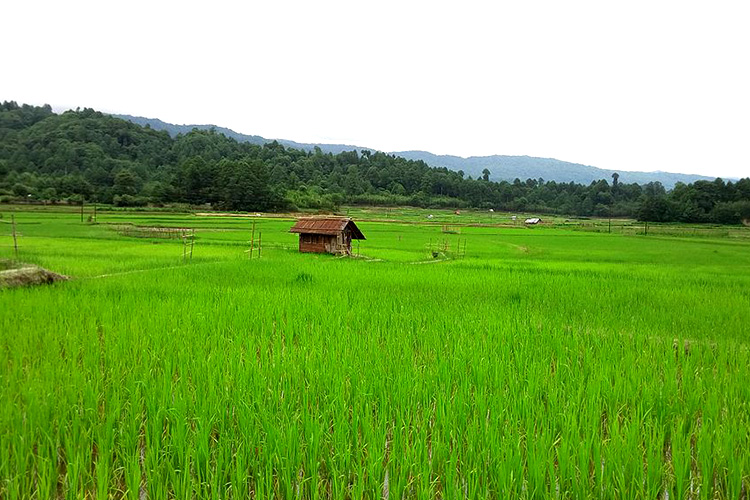 Photo source: Radhe Tangu via wikimedia commons [Public Domain]