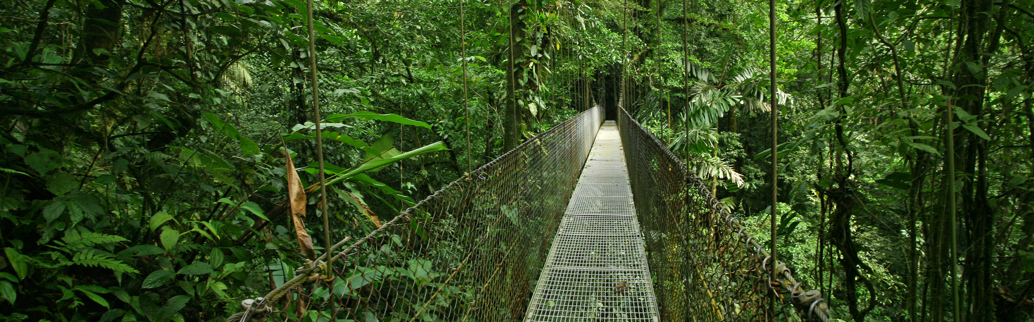 Costa Rica Rainforest Canopy Bridge