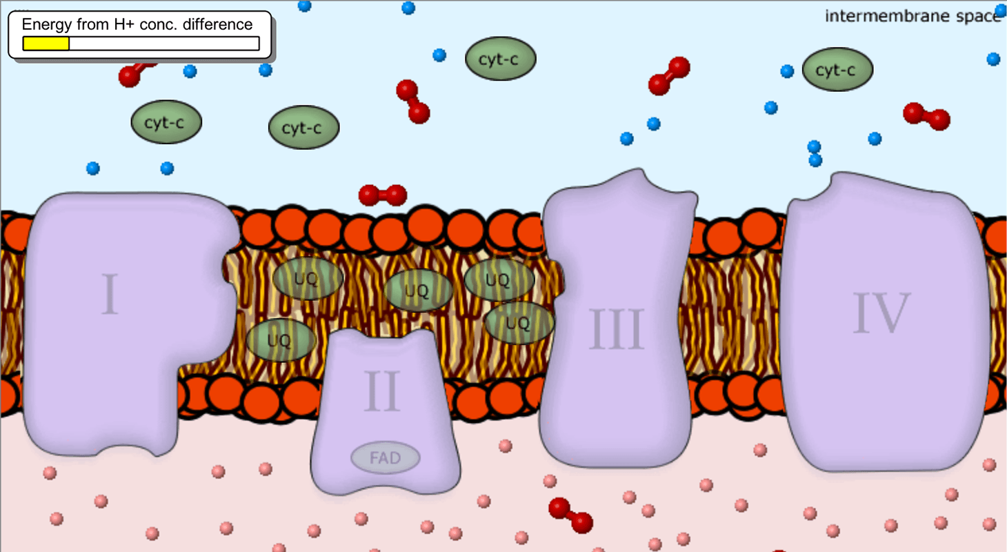 Cellular Respiration Stem Resource Finder