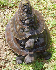 towers of turtles