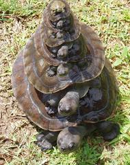 towers of turtles