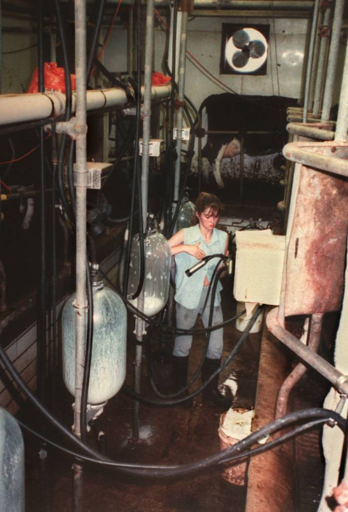 A young woman dressed in work clothes and boots works in a barn full of milking machinery.