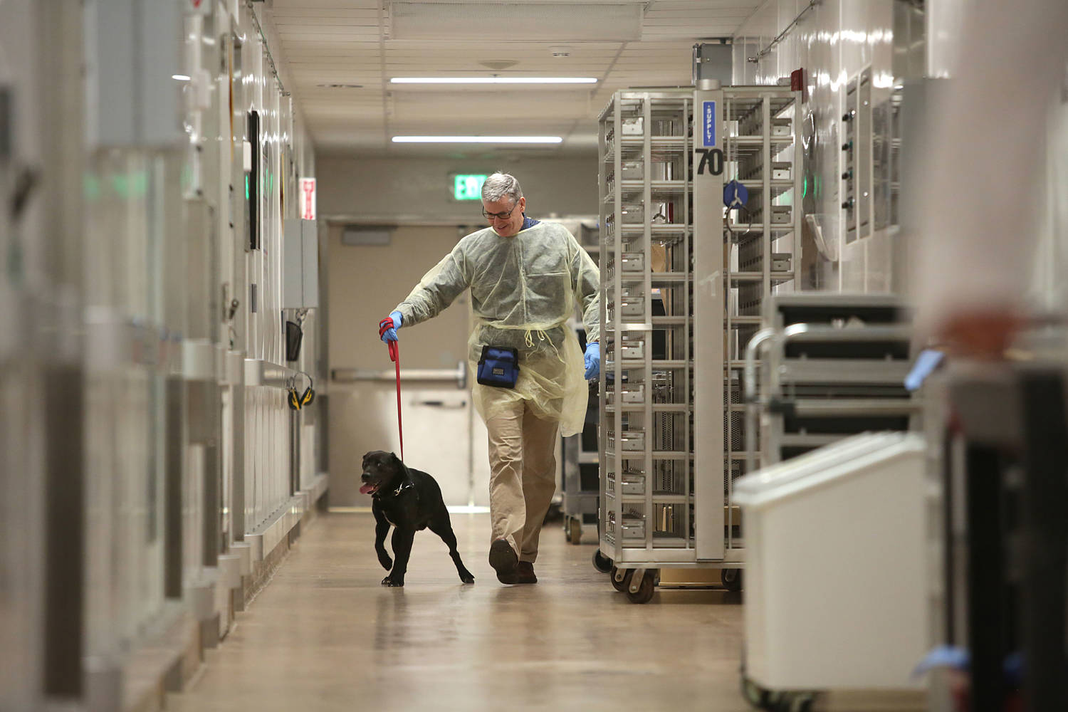 A man walks a dog down a long laboratory hallway.