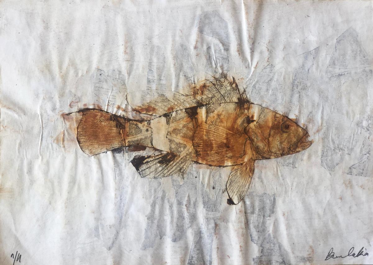 untitled fish 2 by Philippe Boulakia 29.5X41.5 cm