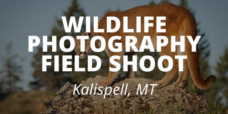 Wildlife-field-banner-mobile