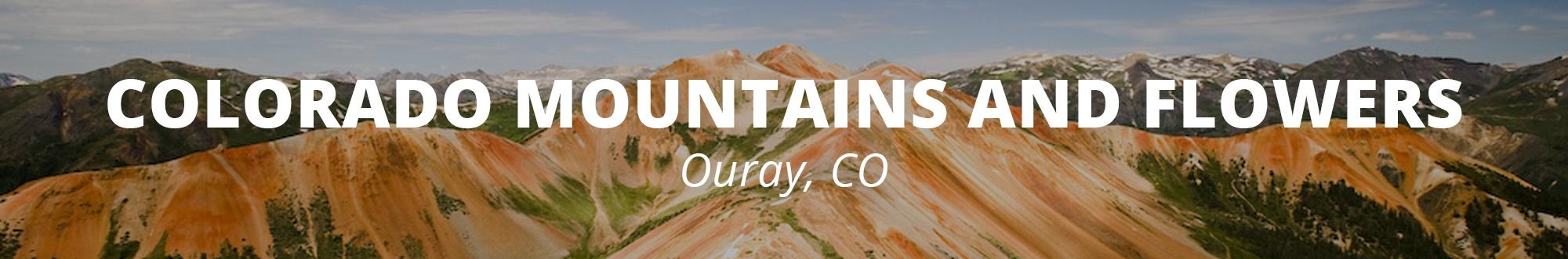 Colorado Mountains and Wildflowers